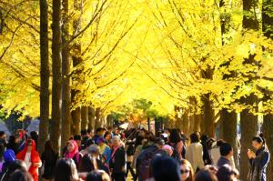 Petite France & Nami Island Tour Packages